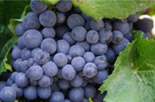 Water and Waste Treatment Product Lines for Wineries