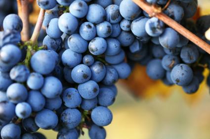 Peristaltic Pump - Pinot Noir